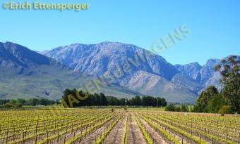 Vinícula na África do Sul