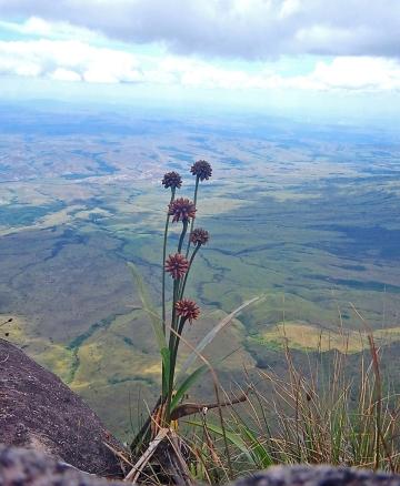 Vista deslumbrante a partir do Monte Roraima.