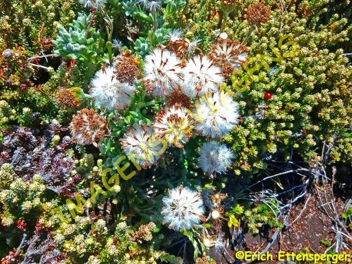 A beleza da flora local