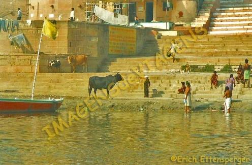 Blog Varanasi 4