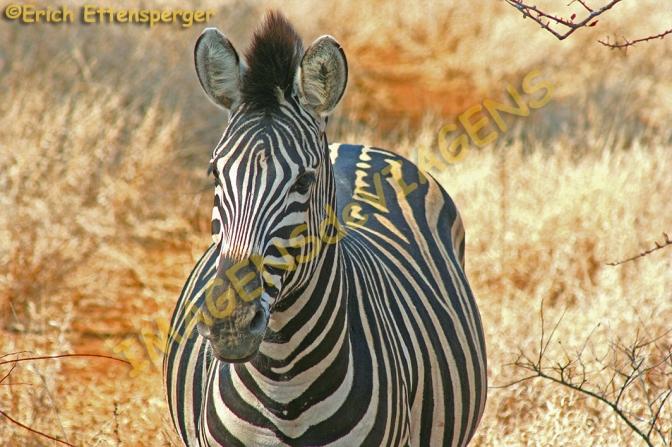Parque Nacional Kruger, uma experiência fascinante na África