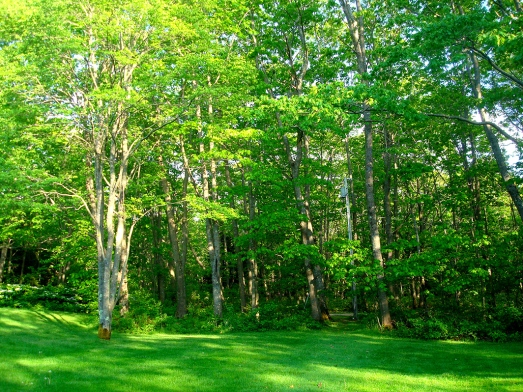 Cerca de 83% do território do estado é coberto por florestas/ About 83% of the state territory is covered by forests/ Über 83% des Staatsgebiets ist mit Wald bedeckt.