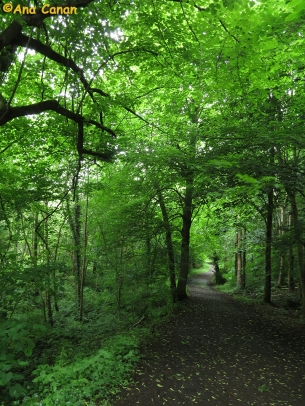 Mountsandel Wood