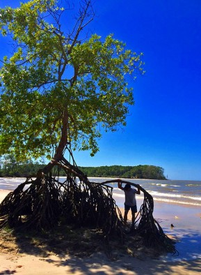 Árvores de raízes aéreas na Praia de Barra Velha/ Bäume mit Luftwurzeln am Strand Praia de Barra Velha/ Trees with aerial roots at the beach Praia de Barra Velha