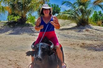 Turista corajosa e um búfalo/Mutige Touristin auf Büffel/ Courageous tourist on a buffalo