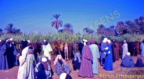 Mercado típico no Alto Egito / Typischer Markt in Oberägypten / Typical market in Upper Egypt