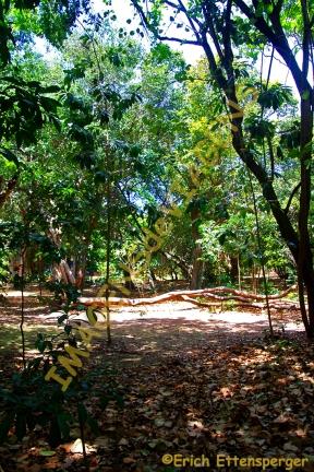 "O Bosque dos Namorados em um momento de silêncio/Der ""Park der Liebenden"" in einem Moment der Stille /The Park in a moment of silence"