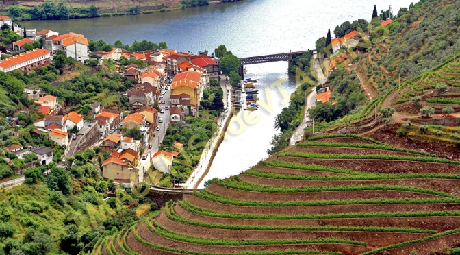 VALE DO DOURO: FLORES E VINHO/VALE DO DOURO – BLUMEN UND WEIN/VALE DO DOURO – FLOWERS AND WINE