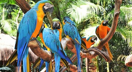 Fonte/Quelle/Source: https://www.agendadoviajante.com/travel-tips/ferias-no-parque-das-aves-foz-do-iguacu/