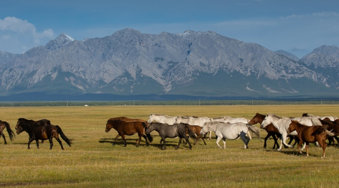 Patrimônio Natural e Cultural da Mongólia/Natur- und Kulturerbe der Mongolei/Natural and cultural heritage of Mongolia